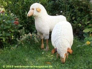 Wollschafe